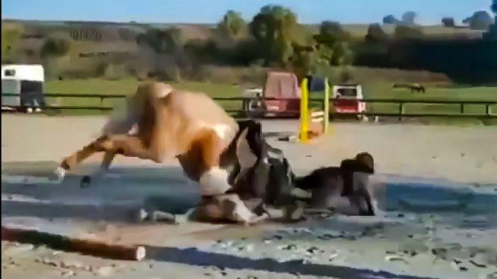 Le cheval échoue et tombe!  // Accueil