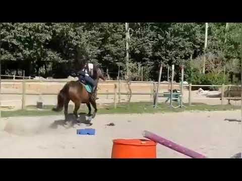 Le cheval tombe et échoue (7)