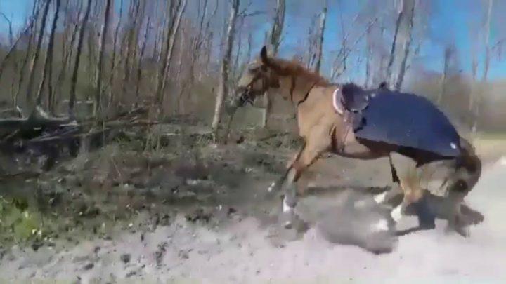 Le cheval tombe et échoue (8)