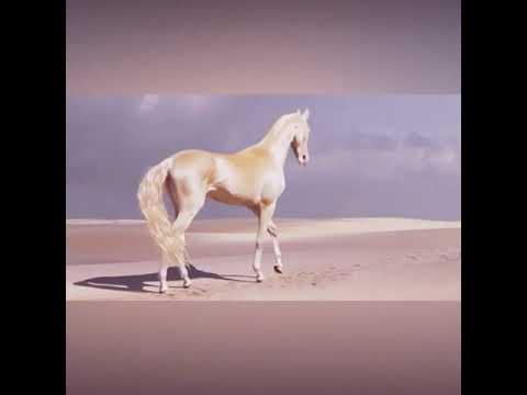 Les Akhal-Téké, un cheval magnifique