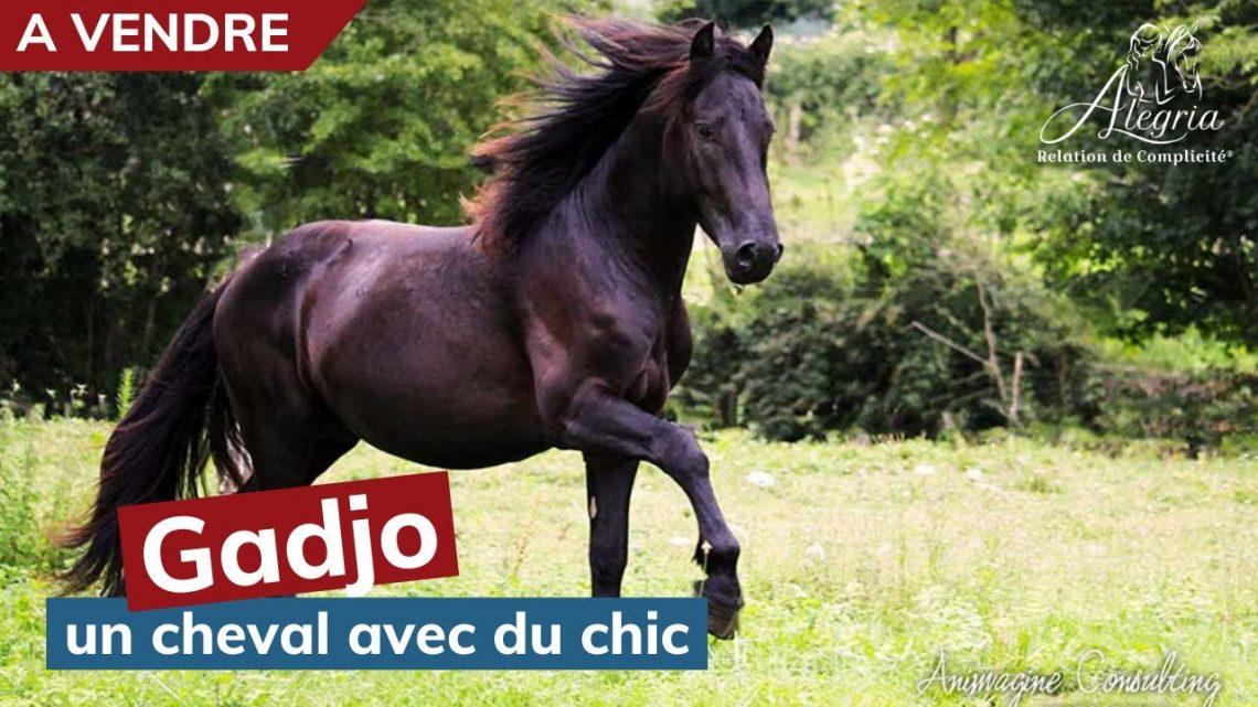 [ MERENS VENDU 🐴] Gadjo, un cheval avec du chic