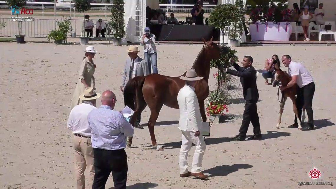 N 60 AVALON JUST MYWENN   2020 Vichy   Championnat de France du Cheval Arabe   Mares with Foals Clas