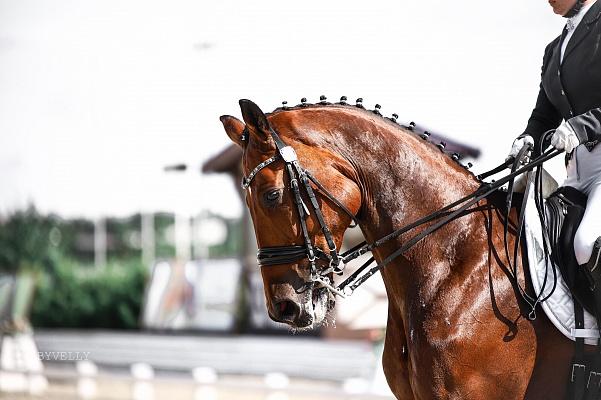 Nouveaux modèles de conduite publiés pour les adultes, les jeunes, les juniors, les poneys et les jeunes chevaux