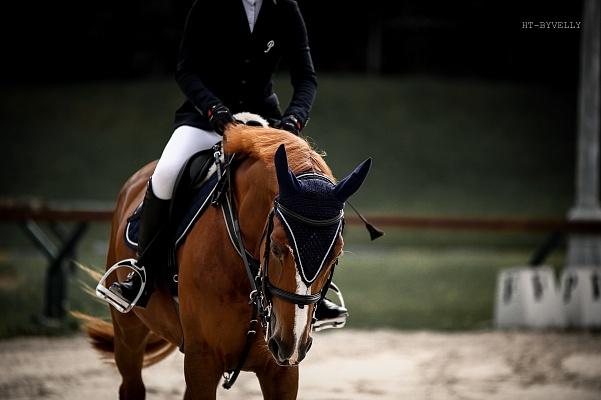 Par décision du Bureau FKSR, l'enregistrement annuel des chevaux a été introduit