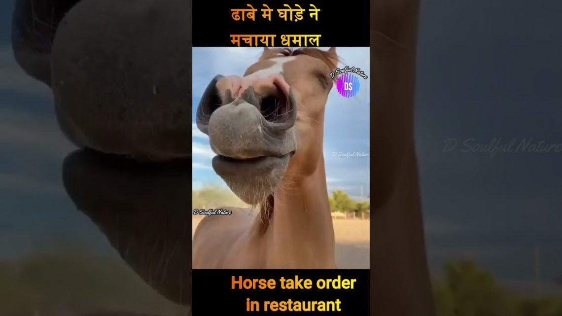 🤪 Que se passe-t-il lorsque le cheval passe commande au restaurant क्या हुआ जब घोड़ा ढाबे मे आर्डर लेने पहुचा #shorts
