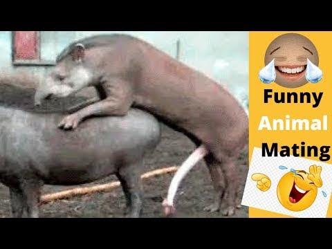 Réunion de cheval drôle de réunion d'animaux drôle ||  Planète sauvage
