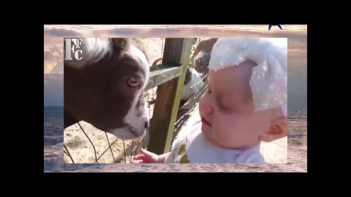 Vidéos drôles – Réaction drôle avec un animal