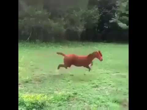 cheval drôle échoue et tombe