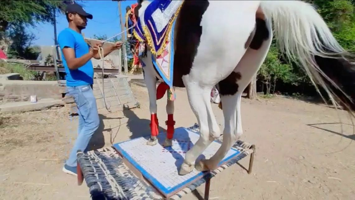 danse du cheval ||  cheval stetus 😍 ||  équitation ||  cheval marwadi ||  cheval rajsthani ||  #rajsthan