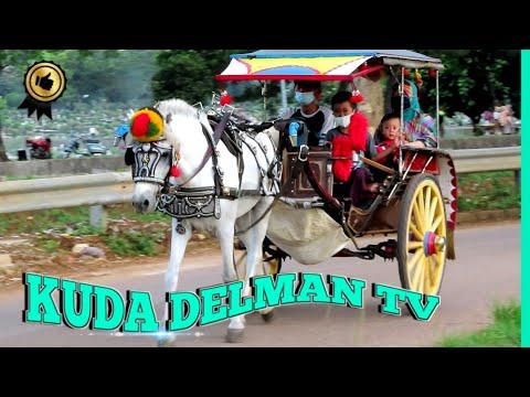🐎 KUDA DELMAN TV 🔴 Kuda Delman Istimewah |  حصان باركور – Calèche tirée par des chevaux – Tanah Kusir Kereta