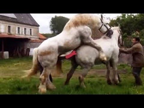 Accouplement de chevaux avec des humains pour de vrai – Des animaux s'accouplent dur et rapidement de près 2021