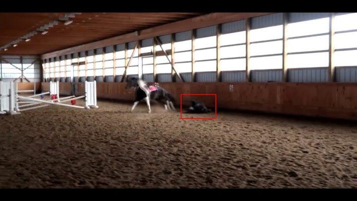 Craziest Horse Falls 2021 Horse FAILS Wild Horses