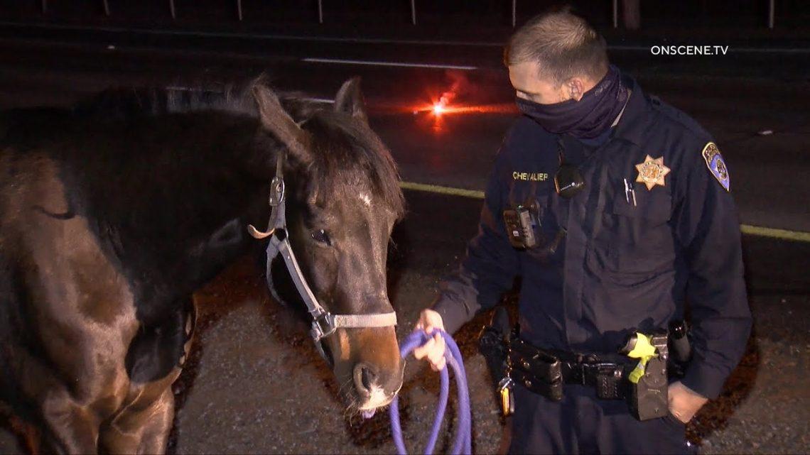 DUI Driver Flips Horse Remorque    Camarillo