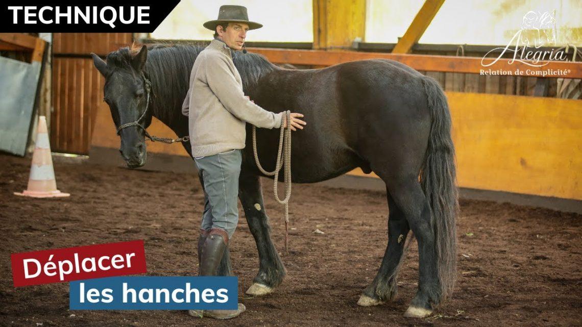 [ EDUQUER SON CHEVAL 👀 ] Déplacer les hanches et reprendre le contrôle d'un cheval qui se cabre