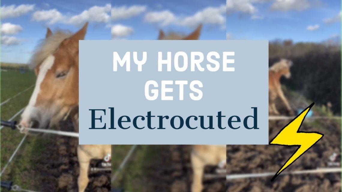 HORSE FAIL – Mon cheval se fait électrocuter #Shorts