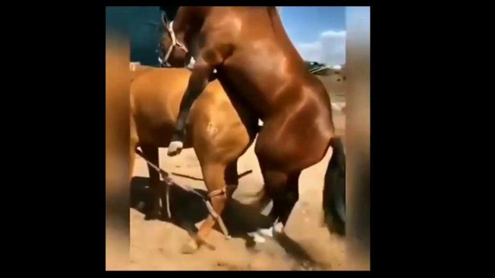 Horse Meeting Video Animal Video