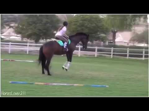 Horse fails and falls! #1