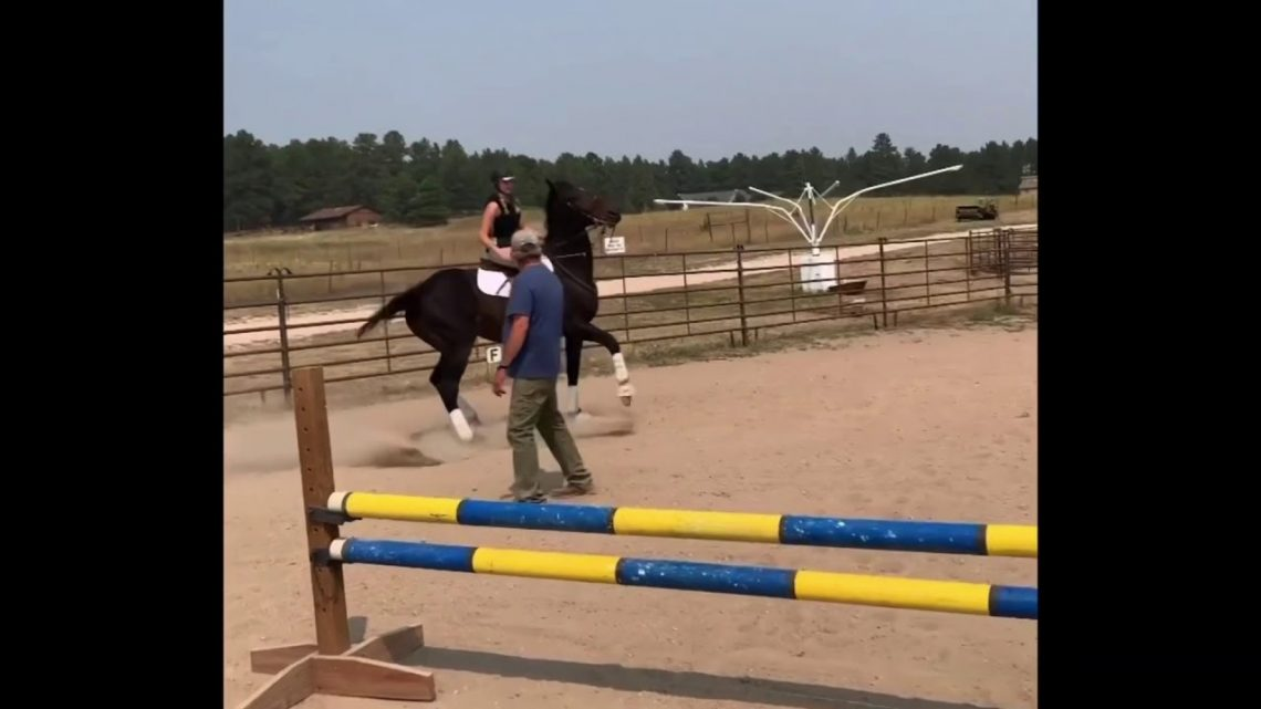 Horse refusals, trips, rears, falls and fails