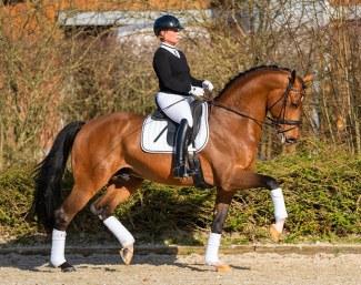 Isabelle Werth voit un avenir sportif chez l'étalon de Valdiviani