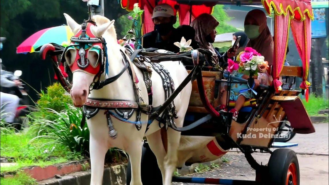 🐎 KUDA DELMAN TV 🔴 Kuda Delman Istimewah    حصان باركور – Naik Delman Kuda Delman Horse Andong