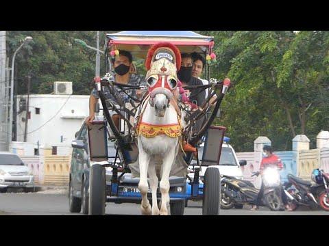 KUDA DELMAN TV 🔴 Naik Kuda Delman Dokar BKT – Cipinang Indah – Naik Kuda – CHEVAL – Pangkalan Kuda