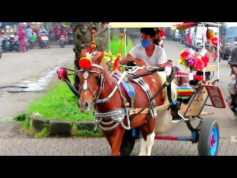 🐎 KUDA DELMAN TV 🔴 WISATA KUDA DELMAN – Naik Kuda |  Cheval – Cikunir – Taman Permata