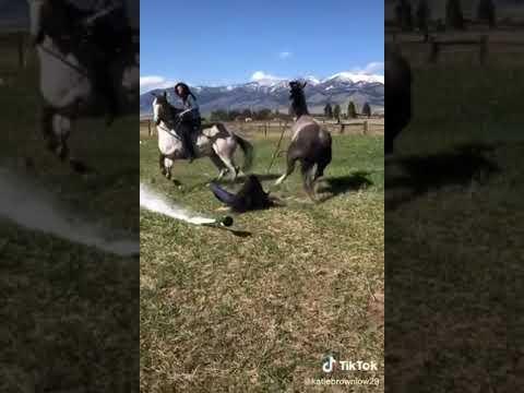 La boisson et le cheval échouent