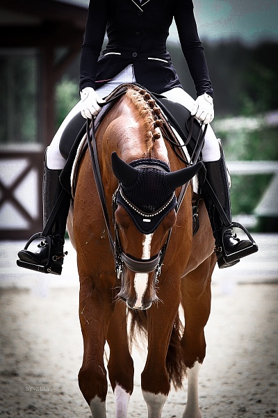 La rhinopneumonie a coûté la vie à 18 chevaux