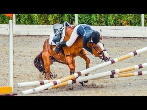 Le cheval tombe et échoue (15)