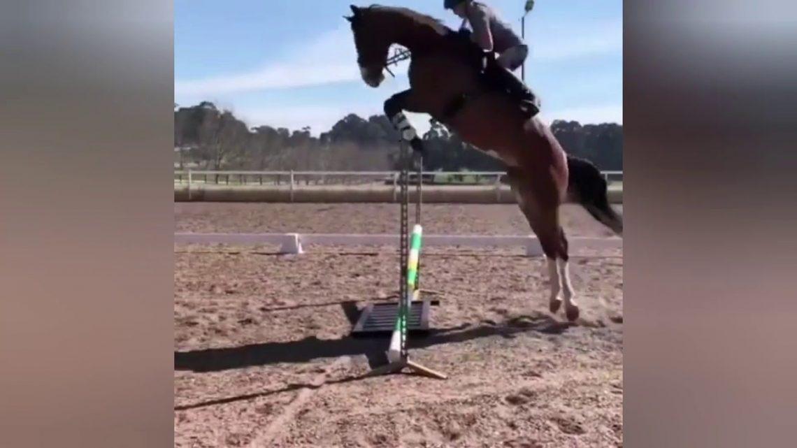 Le cheval tombe et échoue (17)