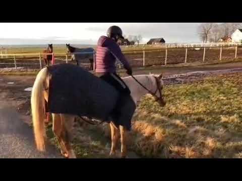 Le cheval tombe et échoue (5)