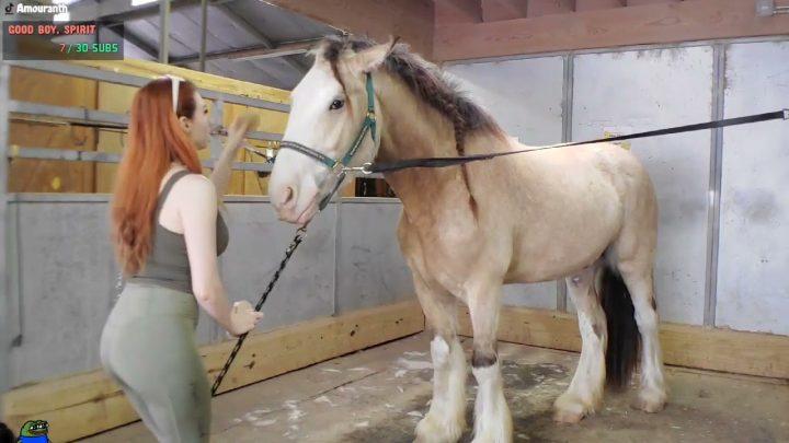 Le cheval voulait toucher sa poitrine