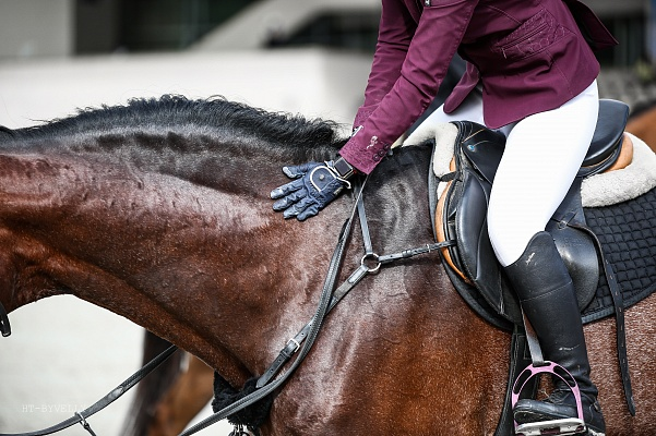 L'épidémie d'EHV-1 à Valence a déjà tué dix chevaux