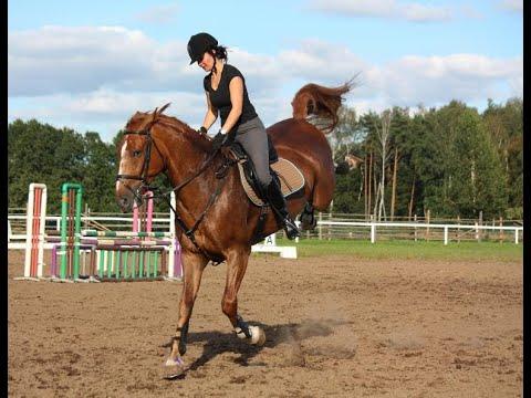 Monstre    Échec de l'équitation   