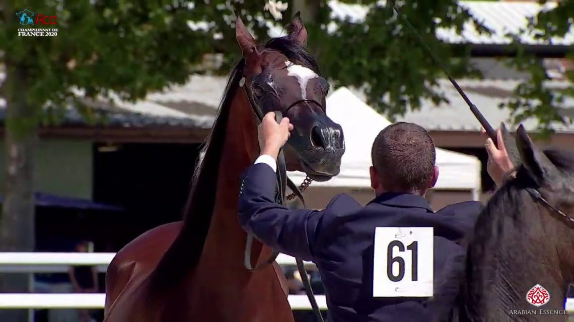 N 61 TF AFRIKHAN KISS   2020 Vichy   Championnat de France du Cheval Arabe   Mares with Foals Class