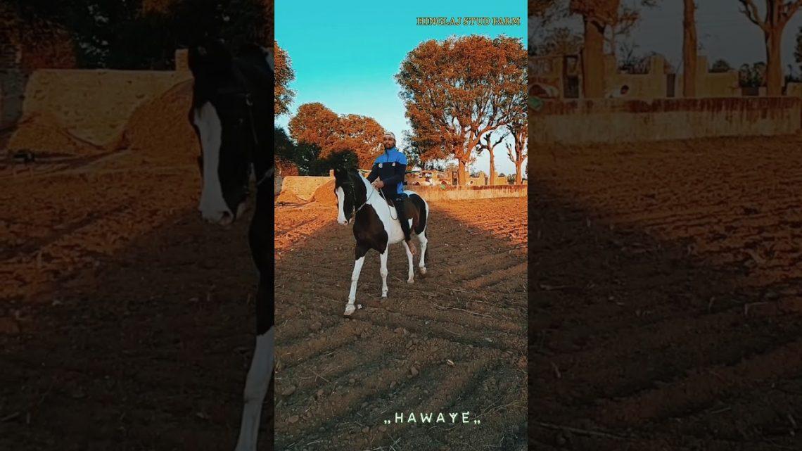 Nouvelle chanson et danse du cheval 2021    राजस्थानी डांस वीडियो    Vidéo de danse Marwadi