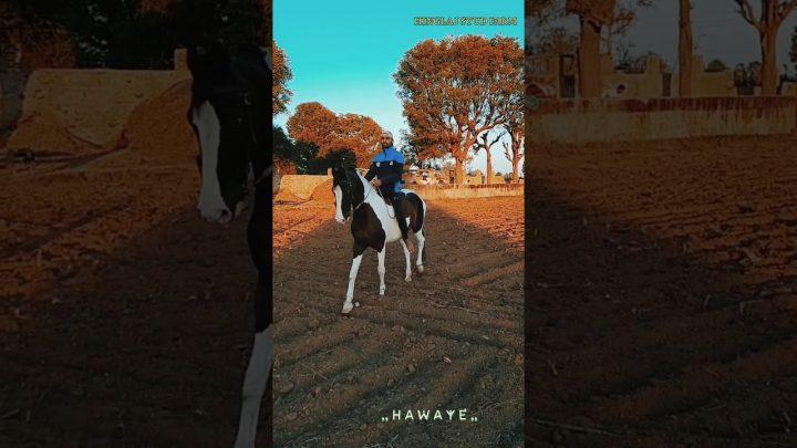 Nouvelle chanson et danse du cheval 2021 |  राजस्थानी डांस वीडियो |  Vidéo de danse Marwadi
