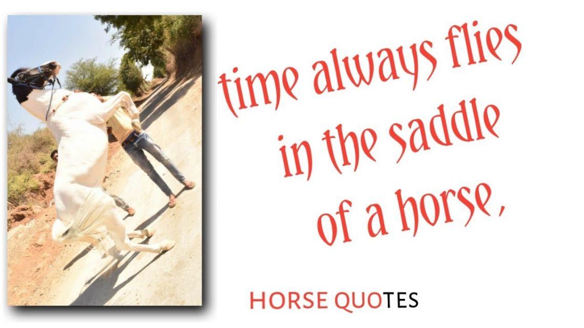 Top 20 des citations sur le cheval |  Cheval – Citation du Secrétariat