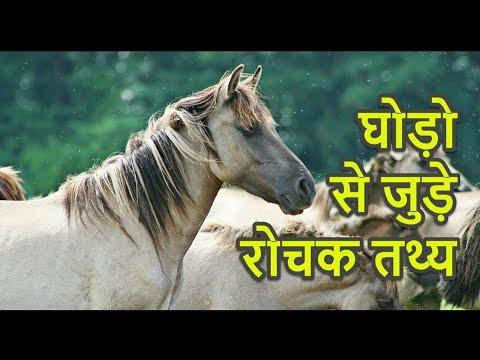 faits sur les chevaux en hindi ||  faits sur les chevaux
