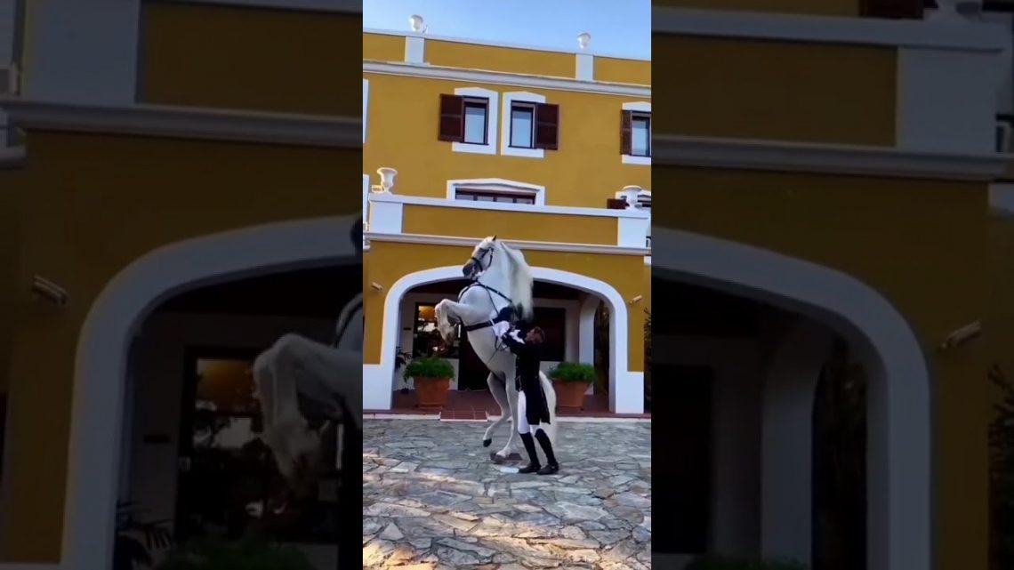 vidéo cheval tik tok