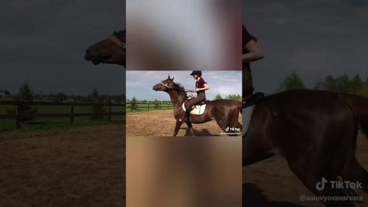 Horse fails and falls