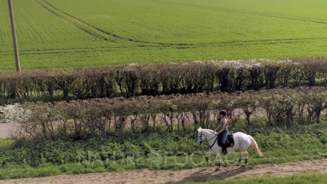 Cavalier dans la campagne au trot