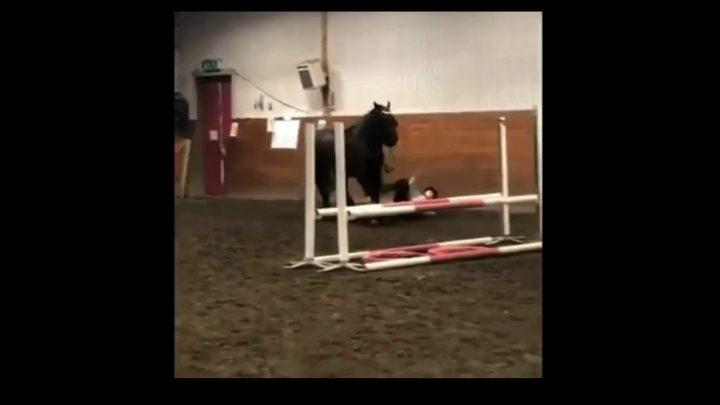 Cheval échoue et tombe