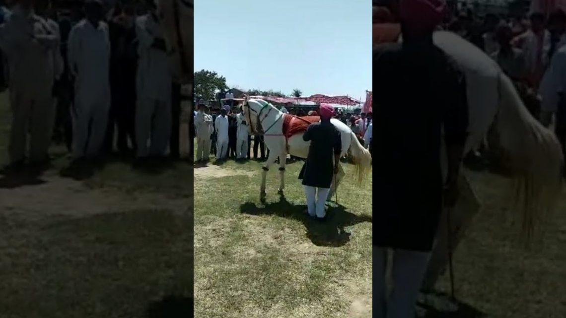 Concours de danse de cheval घोड़ी का डांस !!  मेला Shortvideos SDVkyGaming