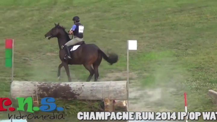 Horse, fails and falls